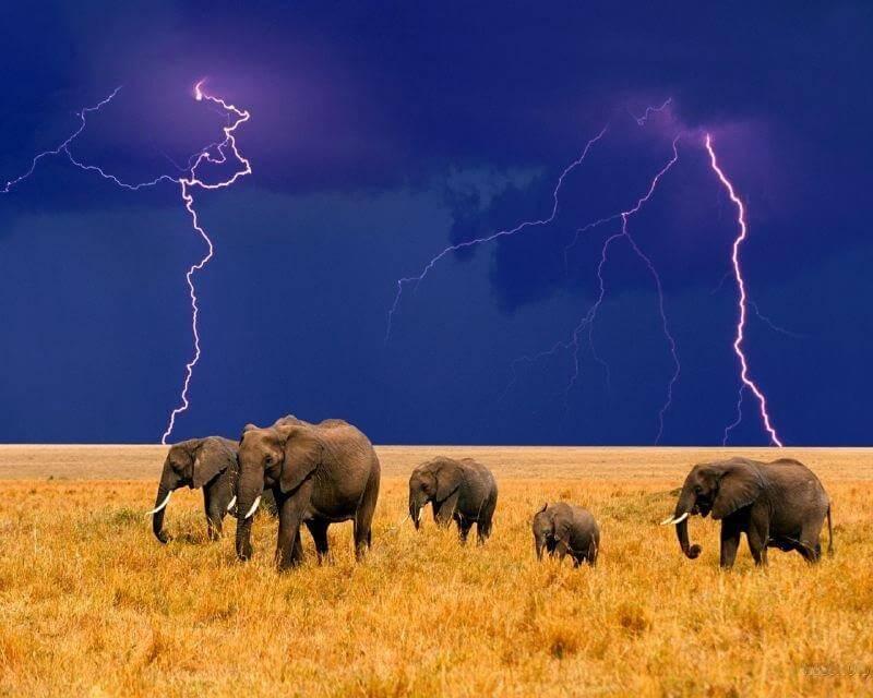 AFRICA A LA CARTE